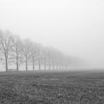 Kirkdale, Mist