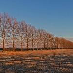 Kirkdale, Sun Set