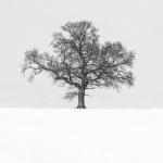 Oak, Kirkbymoorside